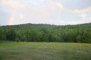 Looking towards the sugarbush over the fields from the house.