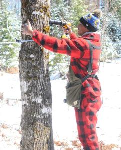 Joshua tapping a tree.
